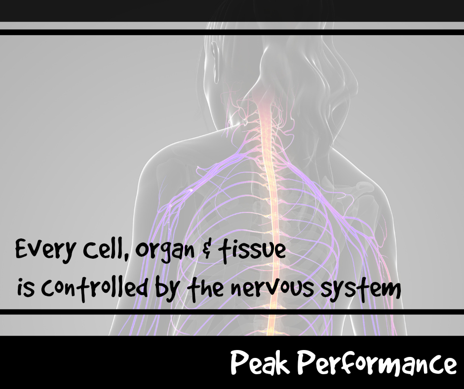 6 Facets Of Health For The New Year Part 6 Nerve System Peak